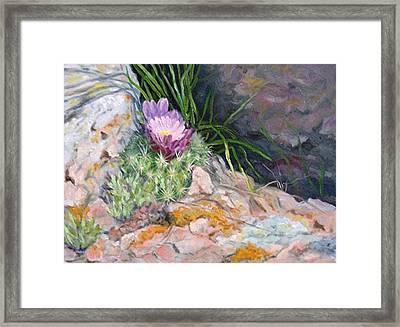 Hedgehog Cacti Framed Print by Debra Mickelson