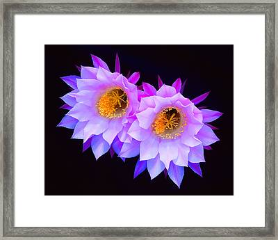 Hedgehog Cactus Flower Framed Print