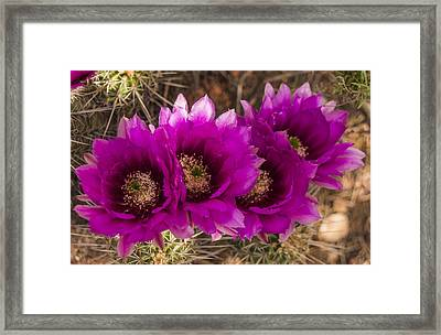 Hedgehog Lineup Framed Print