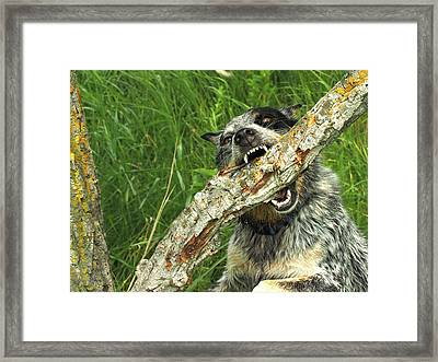 Heeler Vs Tree Framed Print by James Peterson