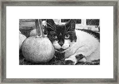 Heffer's Pumpkin Pillow Framed Print by Lorraine Zaloom