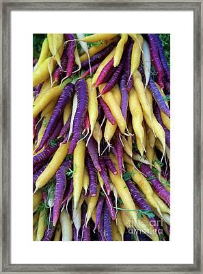 Heirloom Rainbow Carrots Framed Print