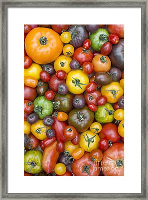 Heirloom Tomatoes Pattern Framed Print by Tim Gainey