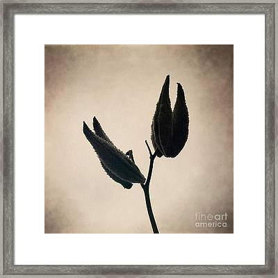 Held High Framed Print