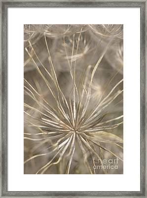 Held In Place Framed Print by Anne Gilbert