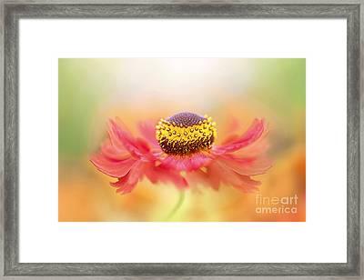 Helenium Flower Framed Print by Jacky Parker