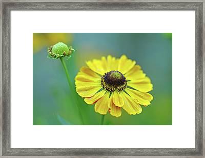 Helen's Flower Framed Print