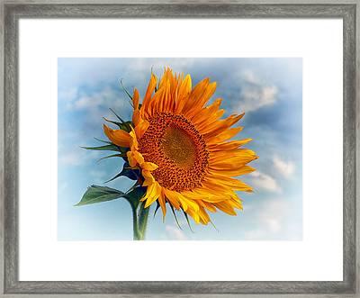 Helianthus Annuus Greeting The Sun Framed Print