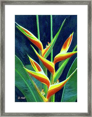 Heliconia Flowers #249 Framed Print by Donald k Hall