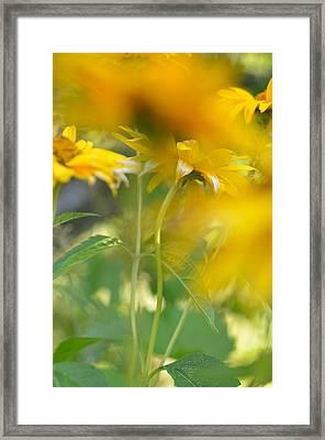 Heliopsis Blur Framed Print