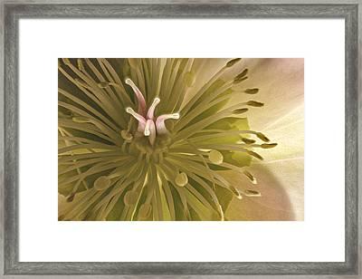 Hellebore Detail Framed Print