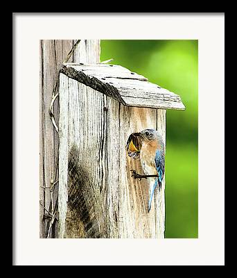 Feeding Young Digital Art Framed Prints
