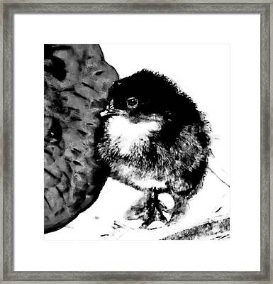 Hello Baby Chick Framed Print