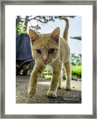 Hello Beautiful 136b Framed Print