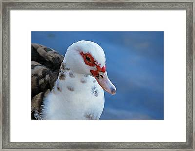 Framed Print featuring the photograph Hello Beautiful  by Teresa Blanton