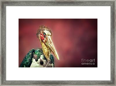 Hello Framed Print by Charuhas Images