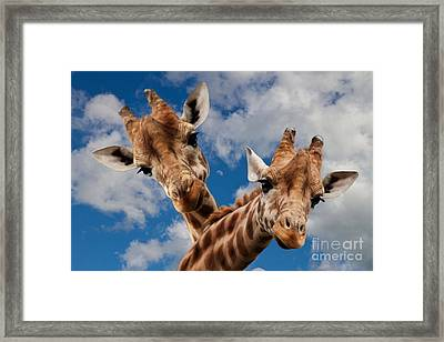 Framed Print featuring the photograph Hello by Christine Sponchia