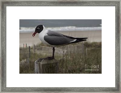 Hello Friend Seagull Framed Print
