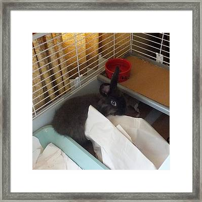 Framed Print featuring the photograph Hello, I Was Just Redecorating by Denise Fulmer