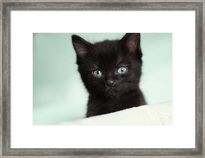 Framed Print featuring the photograph Hello Kitty by Amy Tyler
