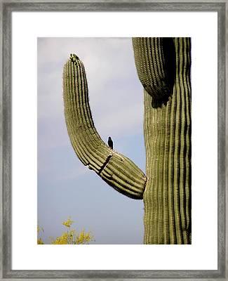 Hello Little Bird Framed Print by Jeanette Oberholtzer