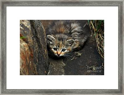 Hello Little Kitty Framed Print