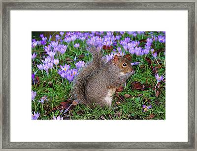 Hello Framed Print by Martina Fagan