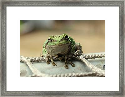 Hello Mr. Frog Framed Print by Anita Hiltz