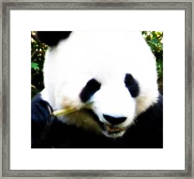 Hello Panda Framed Print