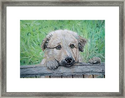 Hello Puppy Framed Print by Yvonne Johnstone