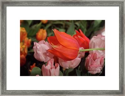 Hello Framed Print by Sandy Moulder