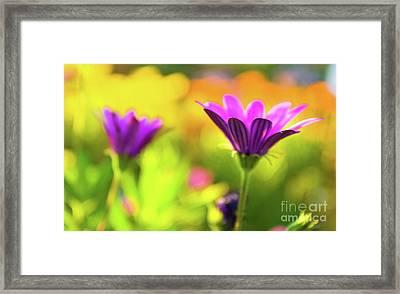 Hello Spring Framed Print