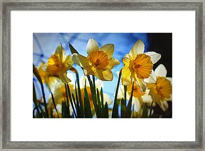 Hello Spring Framed Print by Cricket Hackmann