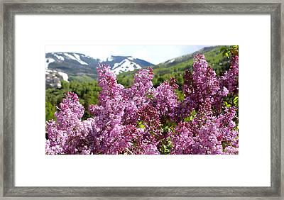 Hello Spring Framed Print by Fiona Kennard