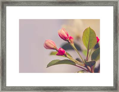 Framed Print featuring the photograph Hello Spring by Yvette Van Teeffelen