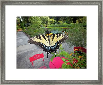 Hello Swallowtail  Framed Print