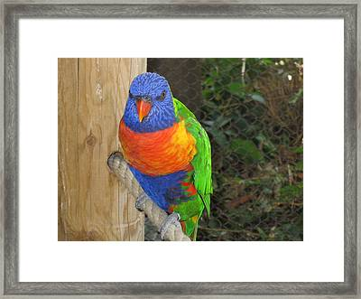 Hello Framed Print by Tammy Sutherland
