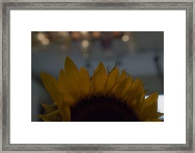 Hello Framed Print by Tara Miller