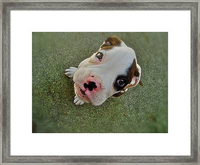 Hello There Framed Print by E Robert Dee