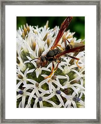 Hello, Wasp Framed Print