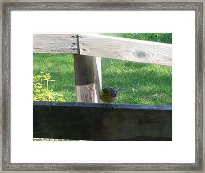 Framed Print featuring the photograph Hello by Wendy Shoults