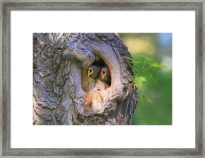 Hello - Anybody Out There  Framed Print by Donna Kennedy