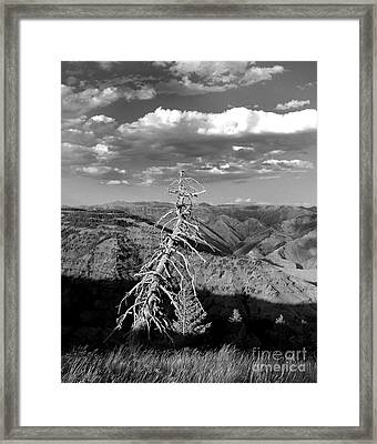 Hell's Canyon National Park Framed Print by Diane E Berry