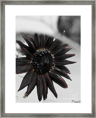 Hells Sunflower Framed Print