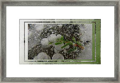 Hemlock In Bubbles Framed Print by Doug Bratten