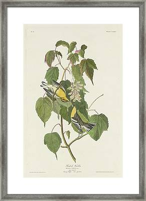 Hemlock Warbling Framed Print by Rob Dreyer