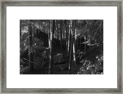 Hemlocks Framed Print