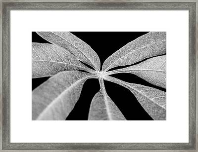 Hemp Tree Leaf Framed Print