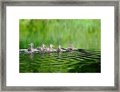 Hen Party Framed Print by Debbie Oppermann