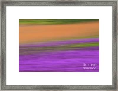 Framed Print featuring the photograph Henbit Abstract - D010049 by Daniel Dempster